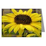 ...Sunflower 02...