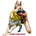Tripawds Rule (Travis Ray)