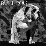 Urban Bulldog III