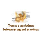 Vas Deferens - Goodies