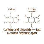 Caffeine & Chocolate - Apparel