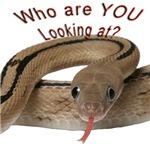 Transpecos Rat Snake