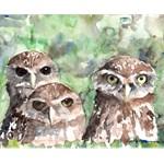 Burrowing Owls #1