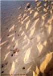 Sea, sun, sand (1)