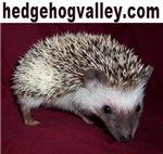 hedgehogvalley.com