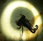 Scorpion in the Spotlight