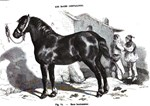 Black and White Print of a Horse