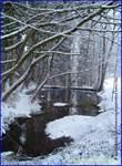 My Pond Winter