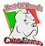 Cane Corso Best
