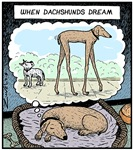 When Dachshunds dream