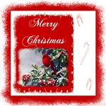 Merry Christmas Cardinal