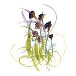 Atom Flowers #2