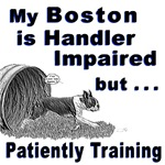 Boston Terrier Agility