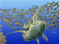 Sea Turtle & Fish