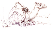 Camel Drawing