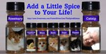 The Spice Kittens