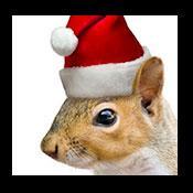 Christmas Santa Squirrel