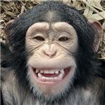 Tote a Chimp