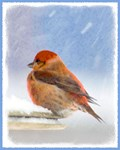 Scarlet Tanager Christmas Card