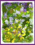 Maine Impasto WIldflowers