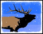 Winter Bugling Elk