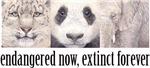 Endangered now