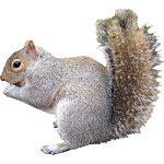 Cute Brown Squirrel
