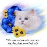 Blue Eyed White Persian Kitten