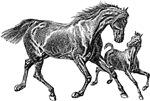 Beautiful Mare Foal Art