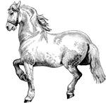 Beautiful White Horse Art