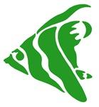 Green Angel Fish