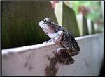 .treefrog aspirations.