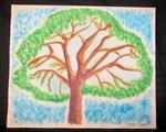 Oak lea Pine