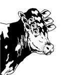 Cow Head Chimera