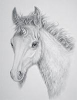 Unicorn Foal by Marc Brinkerhoff