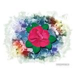 Mini Rose Rainbow