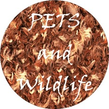 <b>PETS AND WILDLIFE</b>