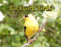 <b>BACKYARD BIRDS WALL CALENDAR</b>