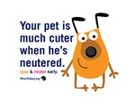 Your Pet Is Cuter When He's Neutered