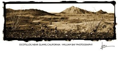 Ocotillos, Outside Glamis, CA