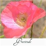 Gratitude Poppy