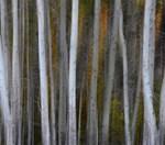 Autumn Illusions 2