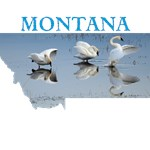 Montana -Swan Ballet