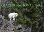 Mountain Billy Goat