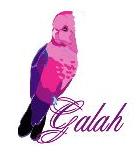 Galah (Rose Breasted) Cockatoo