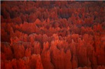 Bryce Canyon Flames
