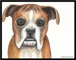 Aimie the Boxer