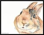 Rascals the Harlequin Rabbit