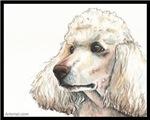 Bart the Standard Poodle