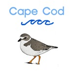 Cape Cod Piping Plover T-Shirts